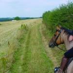 Aston Ring Bridleway
